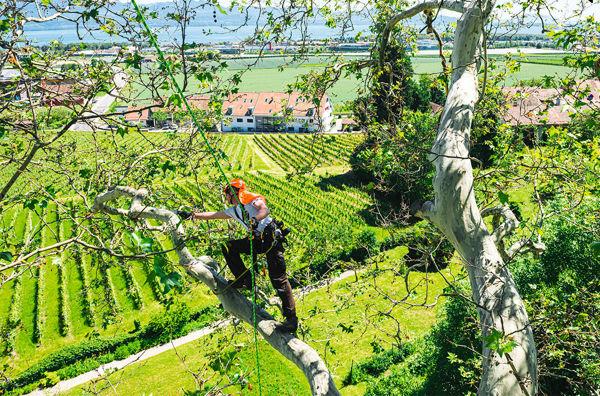 Image de la catégorie Treeclimbing e DPI